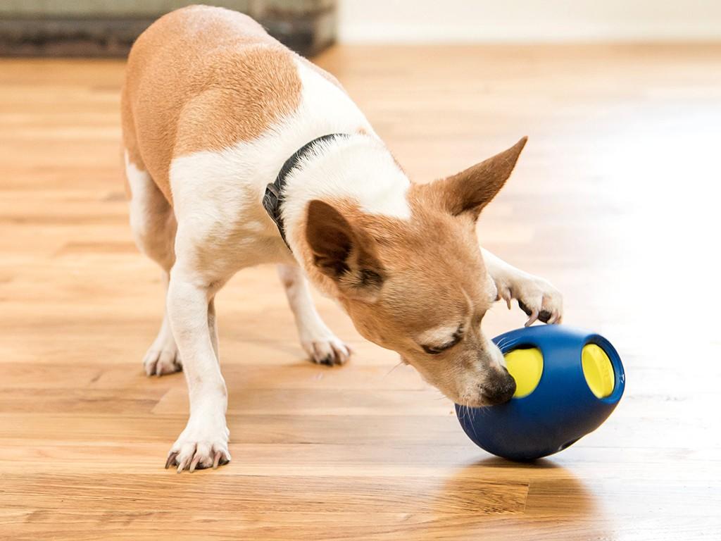 Sbark Tikr Treat Dispensing Dog Toy