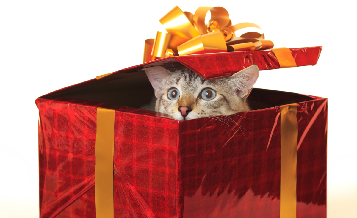 Our Top 5 Gifts For Pets